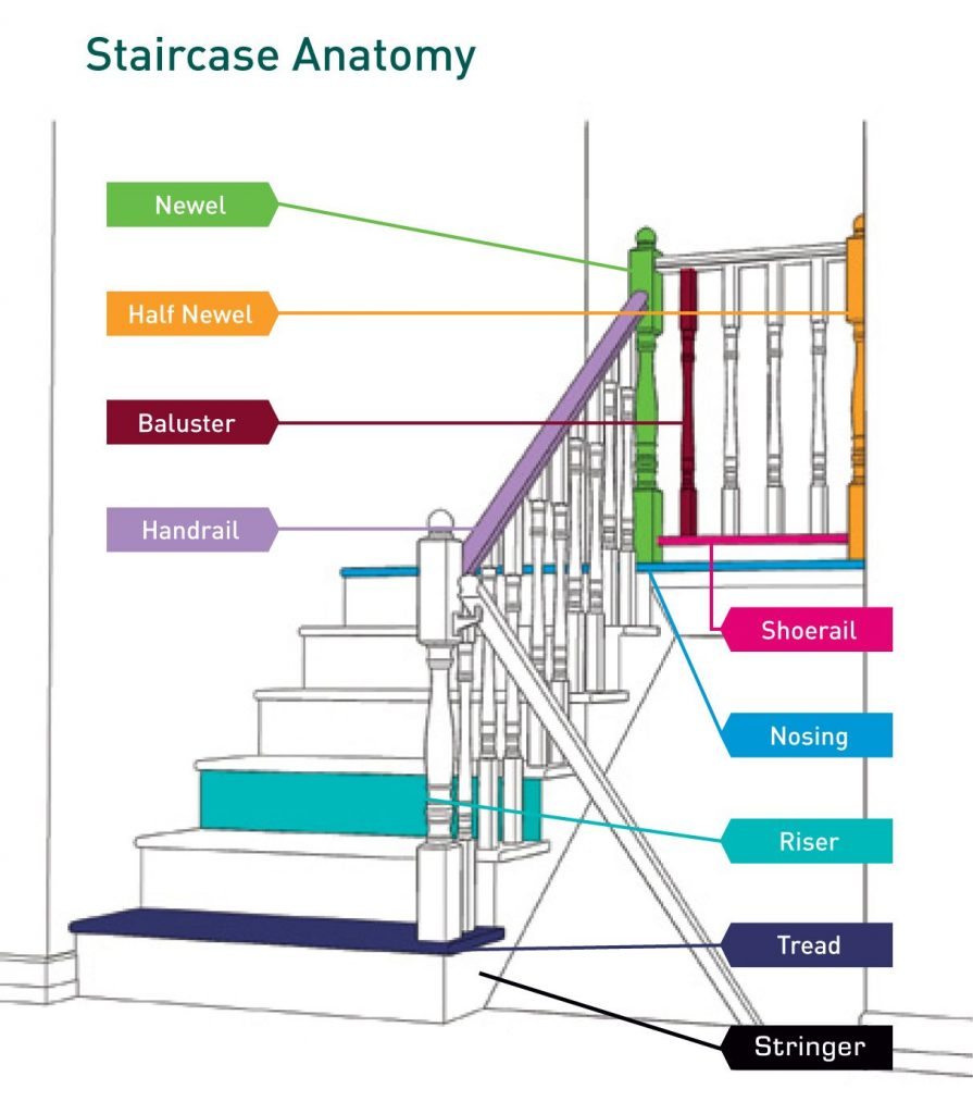 staircase anatomy infographic